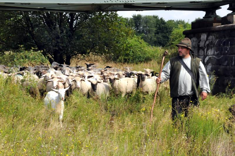 Von Weidefläche zu Weidefläche zieht Schäfermeister Thomas Golz mit seiern rund 400-köpfigen Herde.